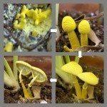 houseplant mushroom