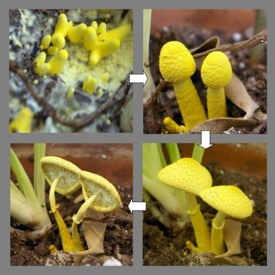 Getting Rid Of Mushrooms Growing In Houseplant Soil