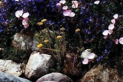 Backyard Rock Gardens: Building A Rock Garden