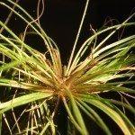 spider-mites-on-plant
