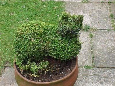 cat-topiary-plant