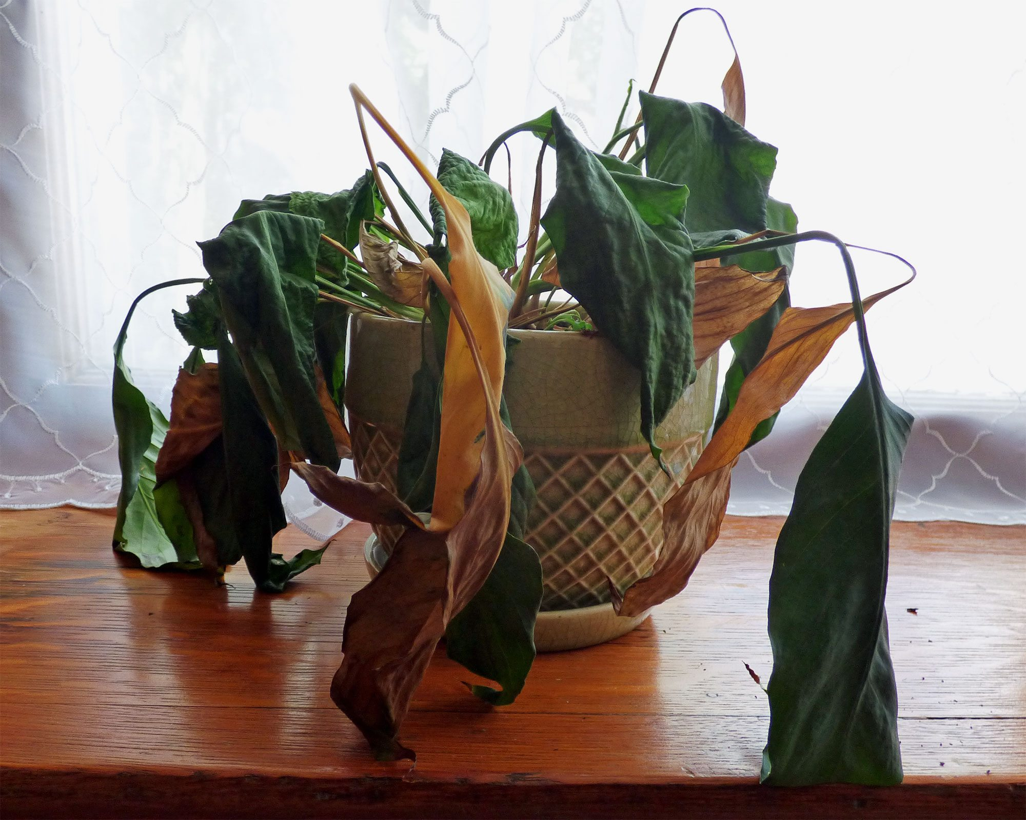 How Do You Tell If A Plant Is Dead