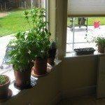indoor-garden