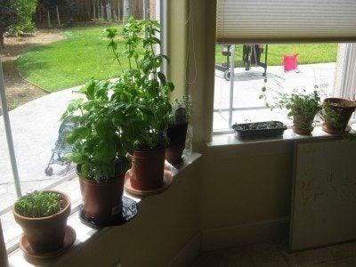 an indoor garden how to diy indoor garden room ideas - Diy Indoor Garden