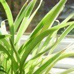 plant-light