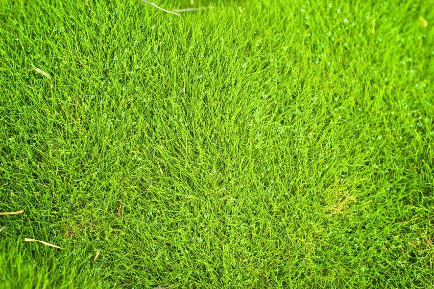 How To Get Zoysia Grass Out Of Flower Beds