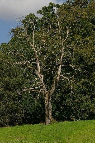 How To Kill Tree Roots Tips For Killing Trees