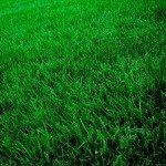 grass-lawn