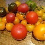 tomato-colors