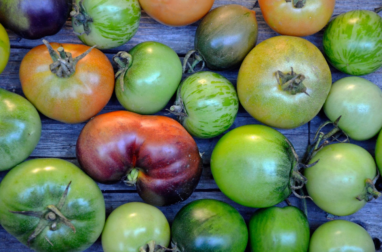Turning Green Tomatoes Red