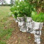 celery-blanching