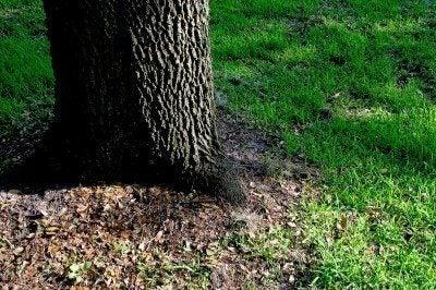 how to grow trees stonehearth