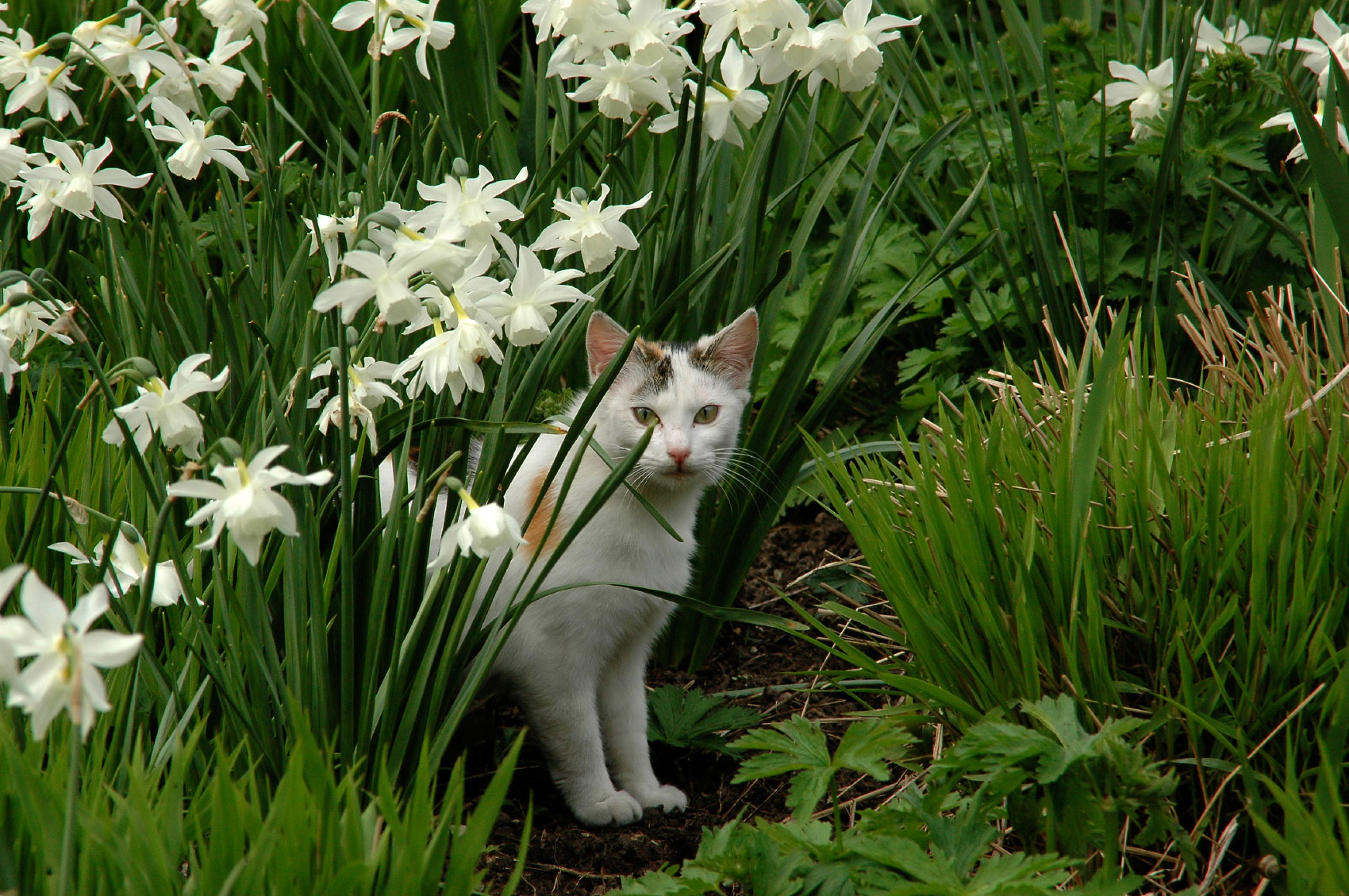 How To Repel Cats Keeping Cats Out Of Garden Areas