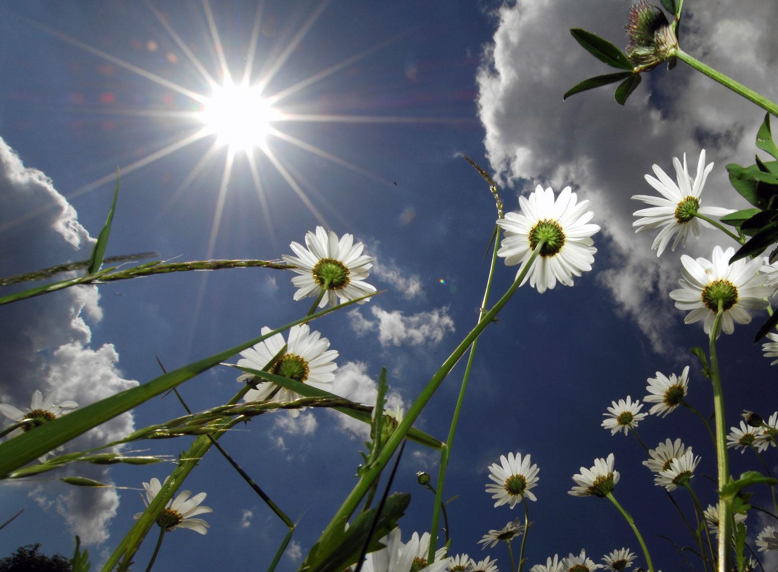 Sun-Hardened to Go the Distance | ODS