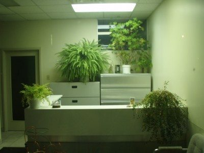 office-plants