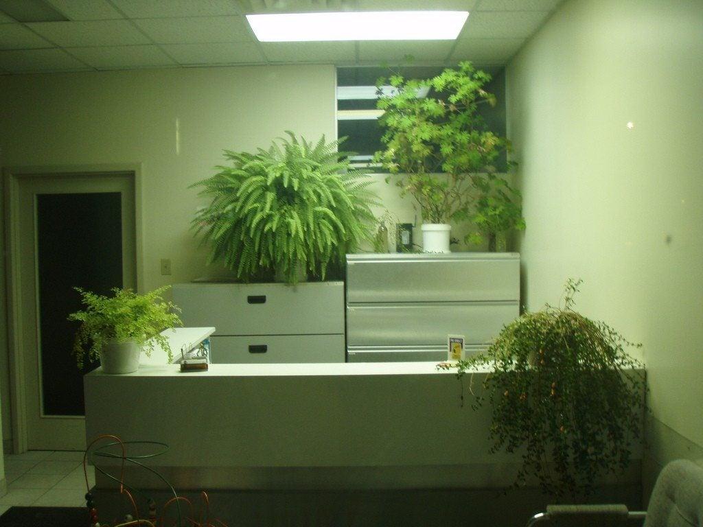 reviving overgrown houseplants