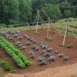vegetable-garden-plot