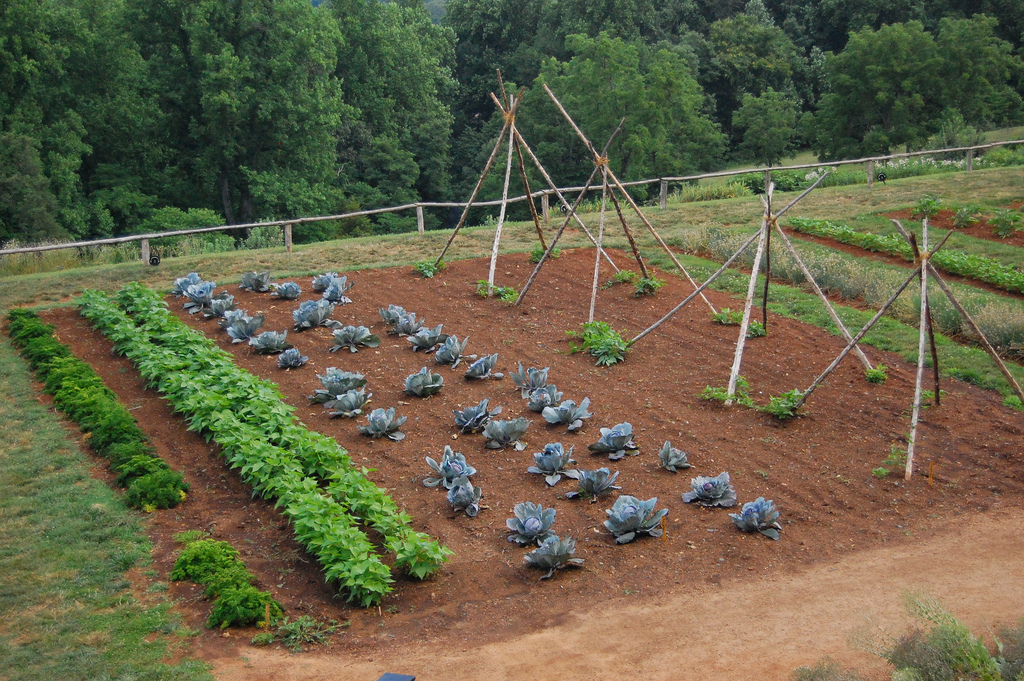 Learn More About Vegetable Garden Crop Rotation