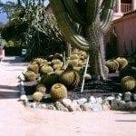 cactus-landscape
