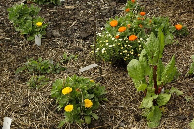 Growing A Companion Vegetable Garden