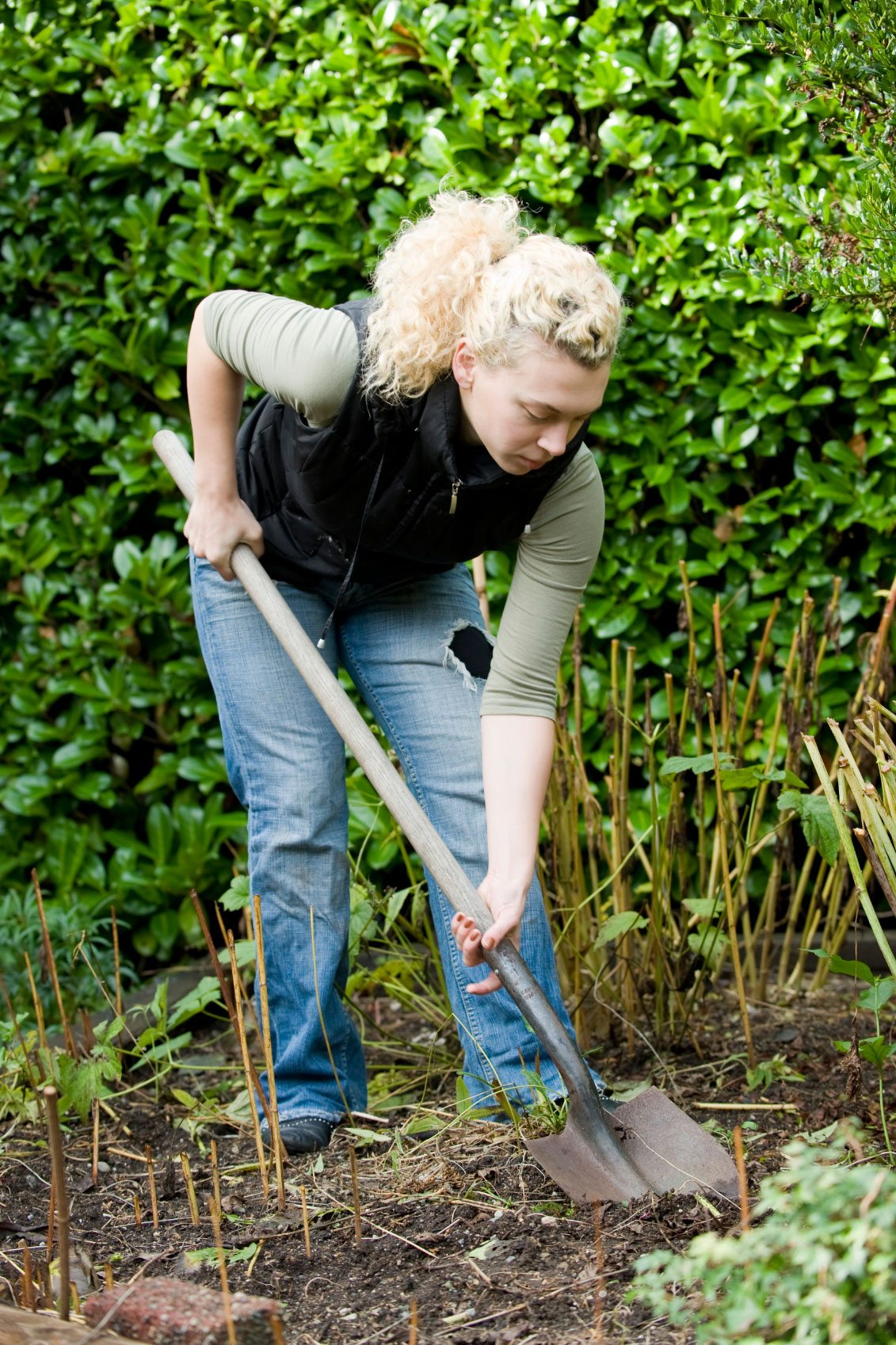 Image Result For How To Start A Garden Without Tilling