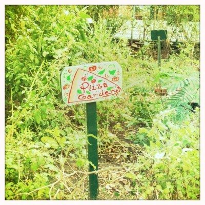 a kids pizza herb garden growing a pizza garden - Pizza Garden