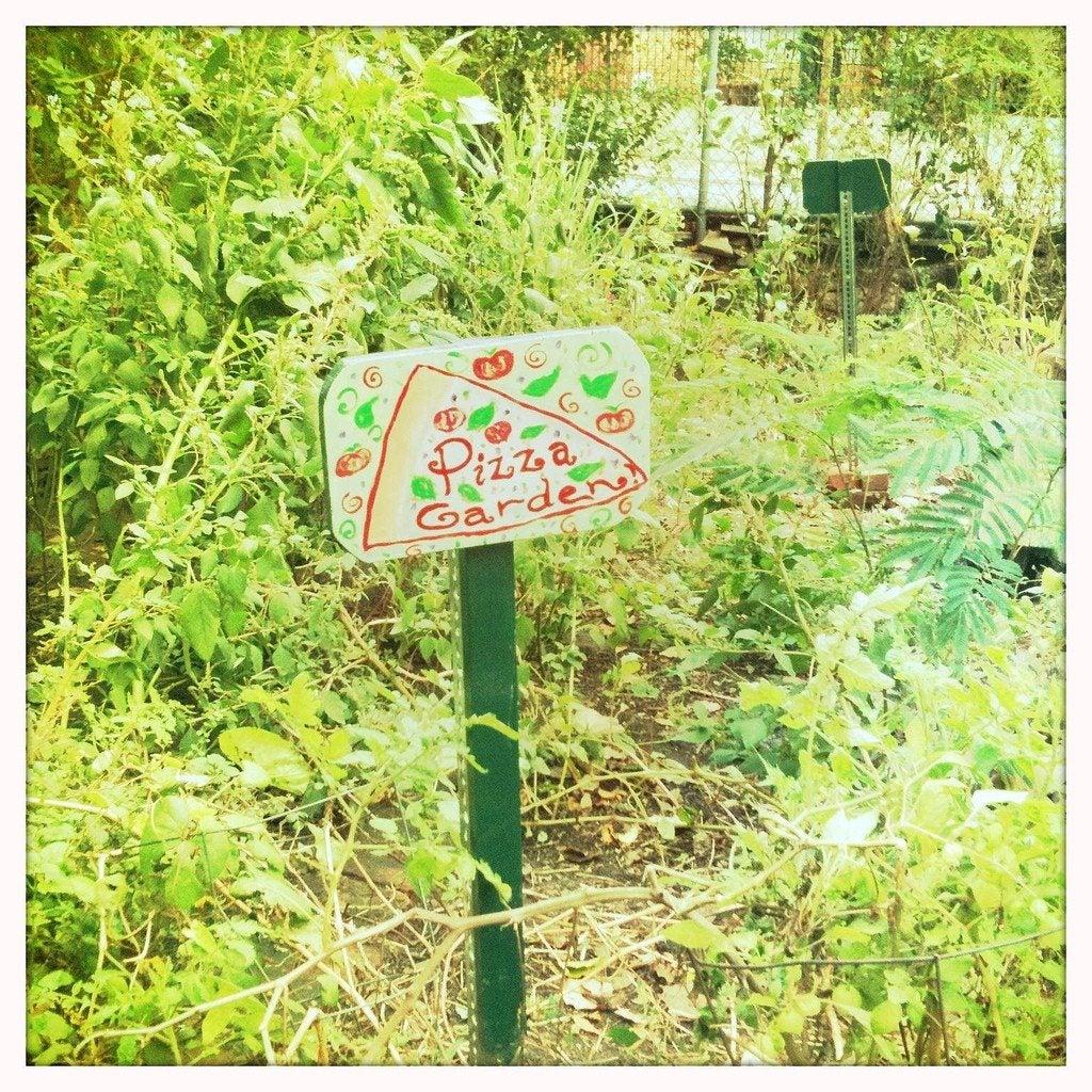 Growing A Pizza Garden: Grow A Kid's Pizza Herb Garden