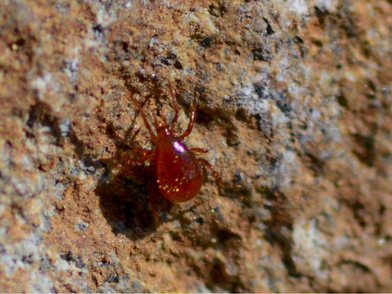 Red Spider Mite Problems How To Control Red Spider Mites