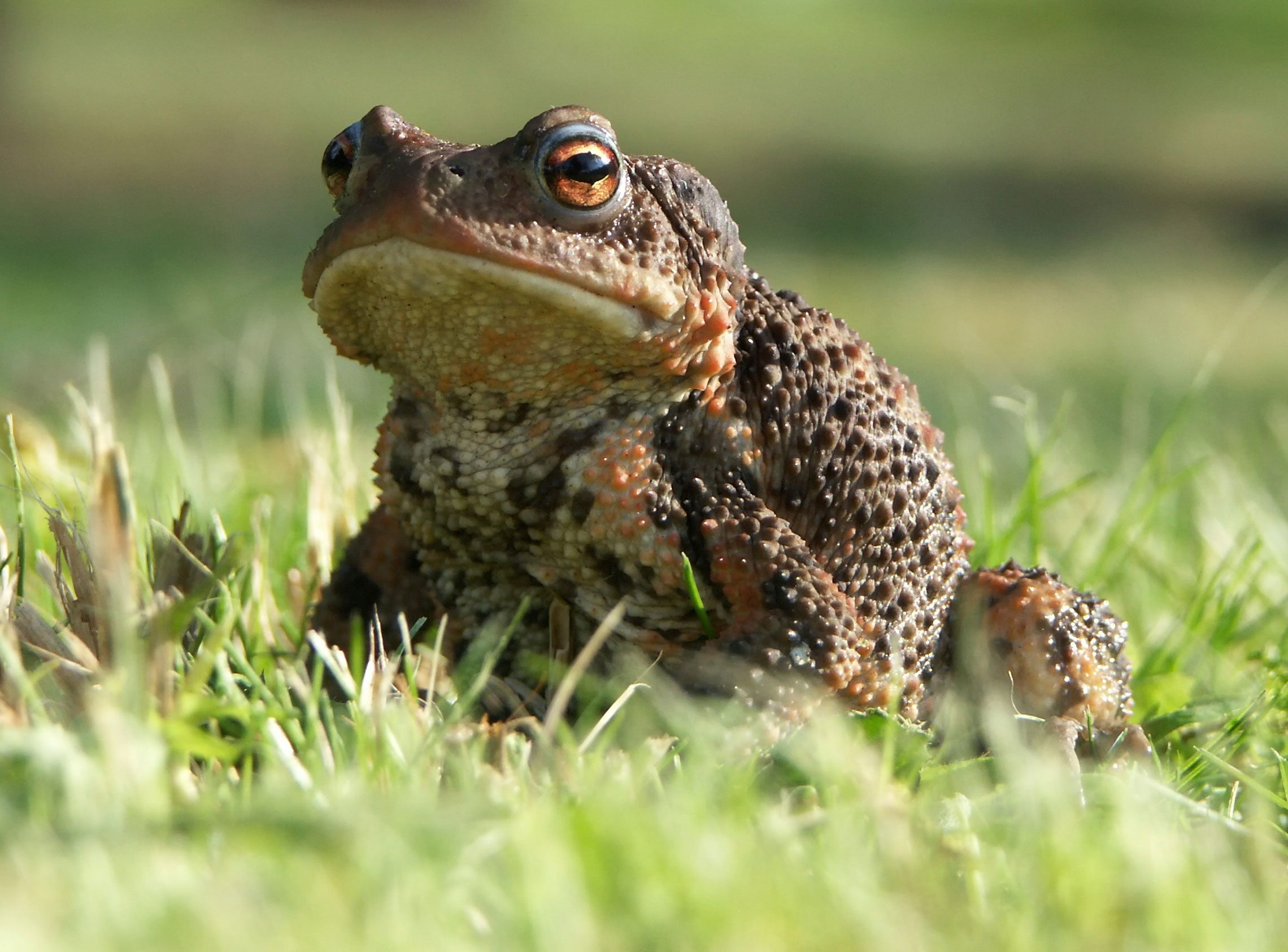 How To Get Rid Of Frogs In Backyard eliminate toads: tips on how to get rid of garden toads