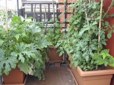 Etonnant Being An Urban Gardener: Creating A City Vegetable Garden