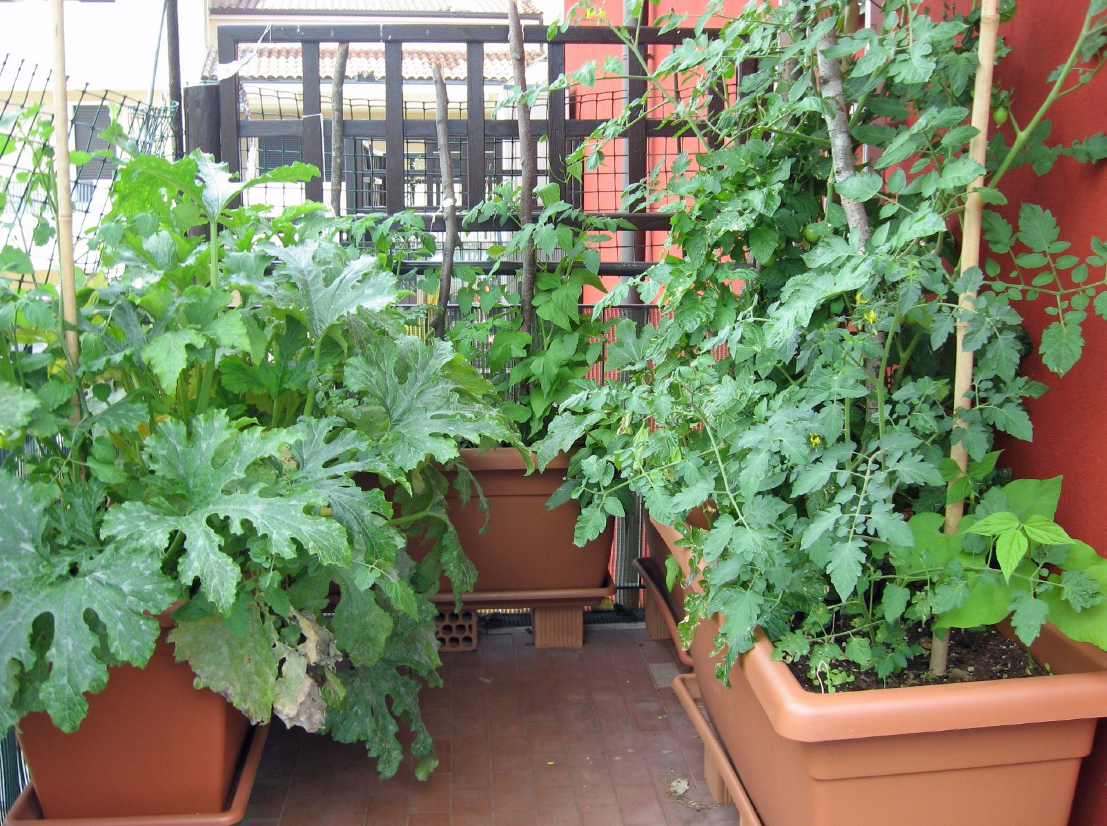 Being An Urban Gardener: Creating A City Vegetable Garden - Gardening Know  How