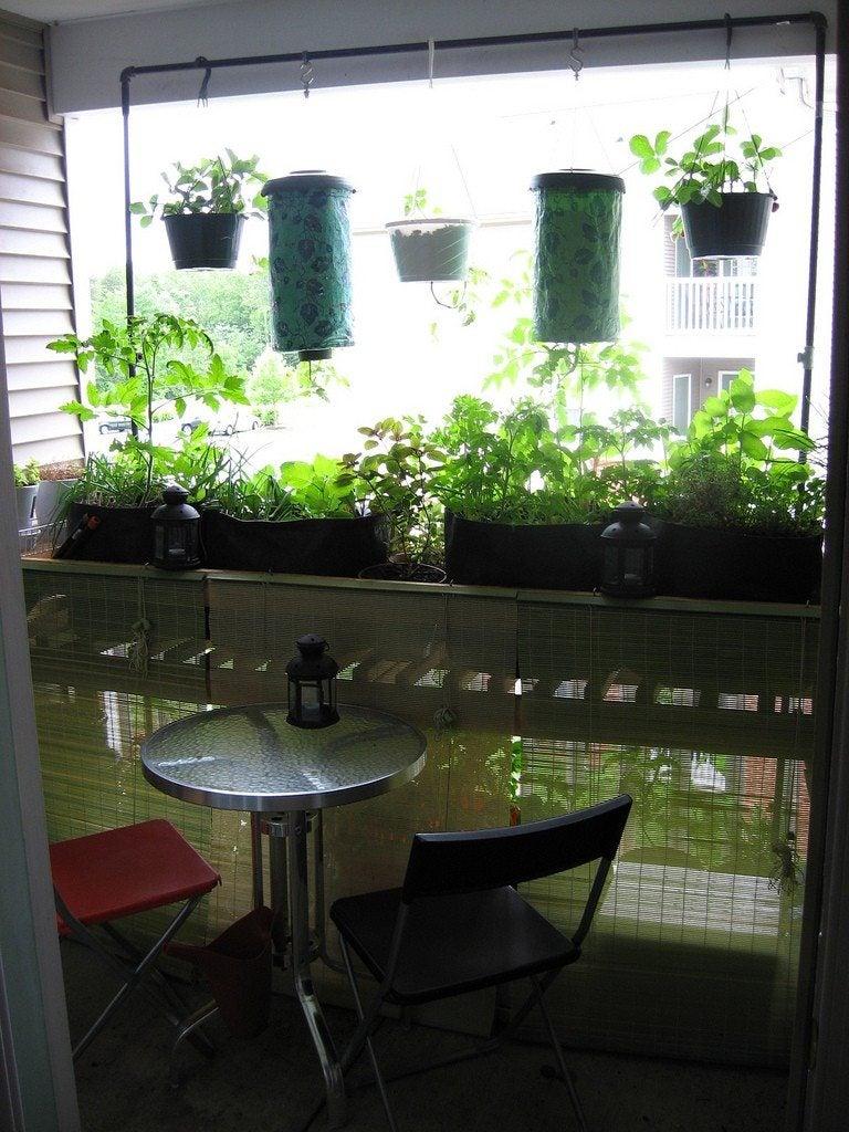 Balcony Vegetable Garden Growing A Vegetable Garden On A