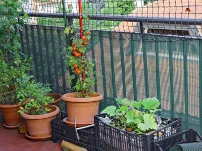 Balcony Vegetable Garden Growing A, Deck Vegetable Garden