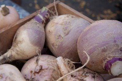 rutabaga-crop