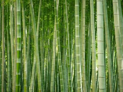 control bamboo