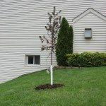 new-tree