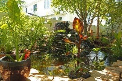tropical-pond