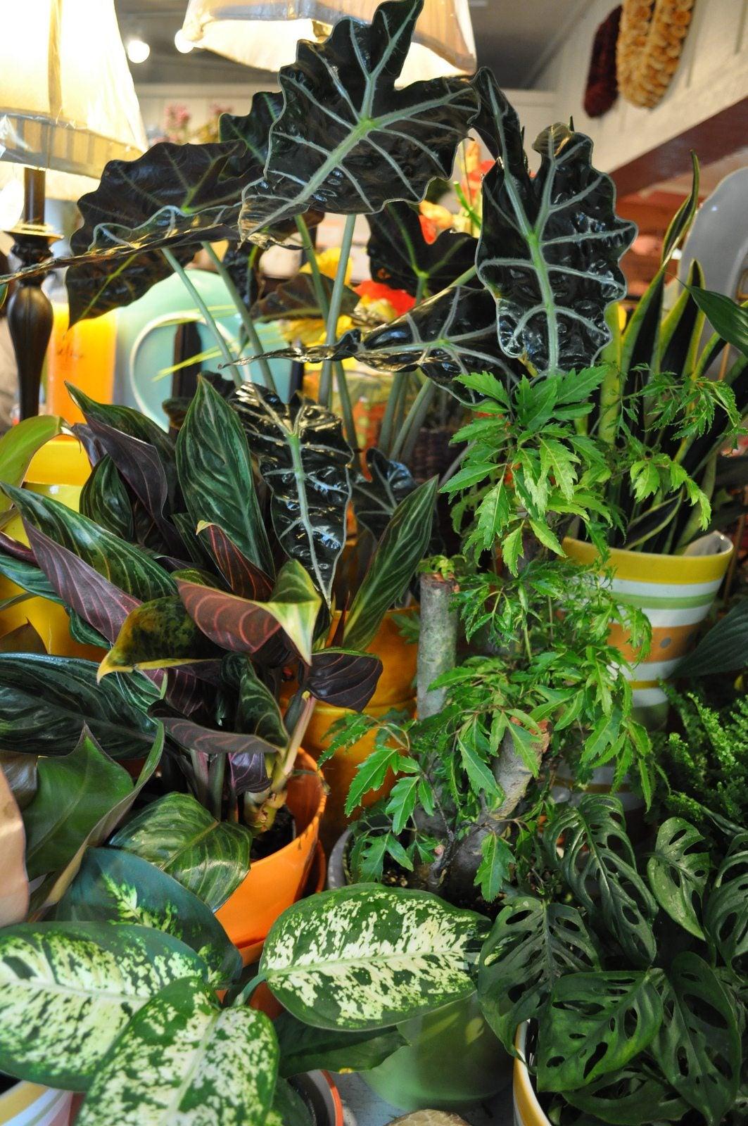 Houseplant maintenance basic tips for indoor houseplant care for Indoor plants with less maintenance