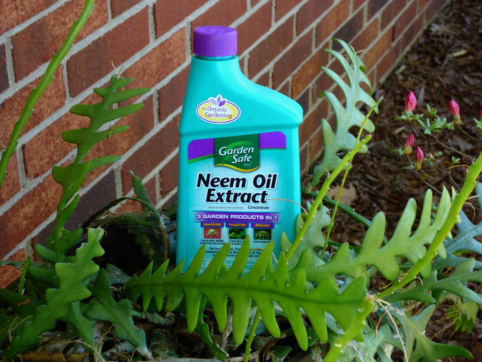 neem oil uses using neem oil insecticide in the garden. Black Bedroom Furniture Sets. Home Design Ideas