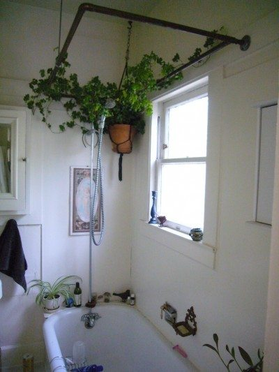 Bathroom Plants: Learn About The Best Plants For A Bathroom on best plants for dark rooms, best plants for pool area, best plants for basements, best plants for sun room, best plants for feng shui, best plants for gardening, best plants for wet areas, best plants for containers patio, best plants for privacy, best plants for around a patio, best plants for entryway, plants that thrive in bathrooms, best plants for zone 6b, best plants for water, best plants for atriums, best plants for decks, best plants for glass, best plants for high desert, best plants for zone 10, best outdoor plants,