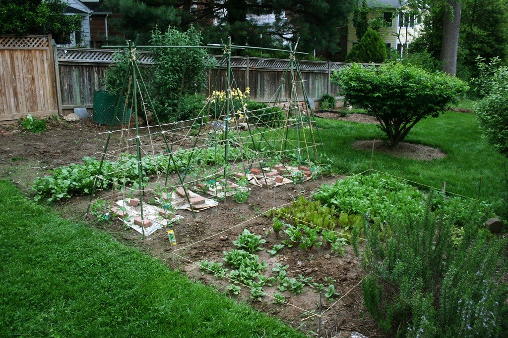 Backyard vegetable garden1