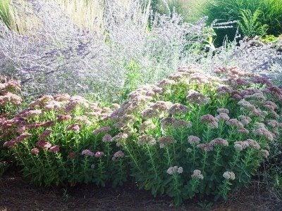 xeriscape-flowers