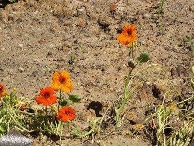 Sandy soil amendments: how to do sandy soil improvements