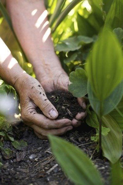 vegetable garden soil soil requirements for vegetable plants - Vegetable Garden Soil