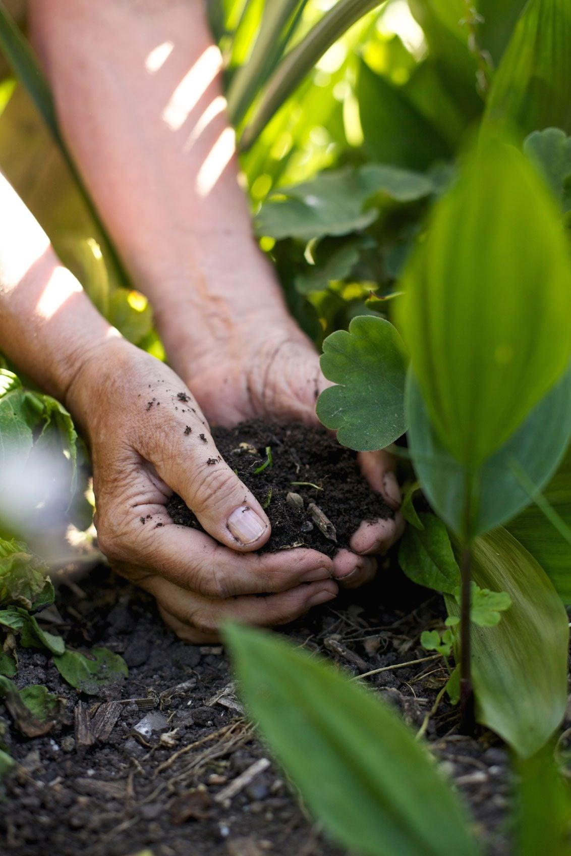 Best Soil For Growing Vegetables Soil Preparation For Your Vegetable Garden