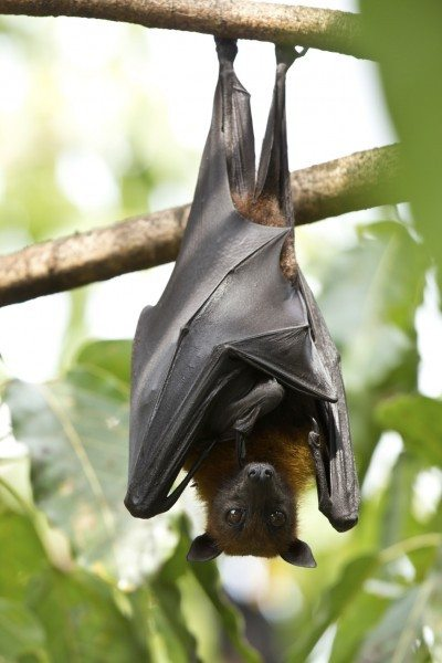 Perfect photos of is bat guano taken last month