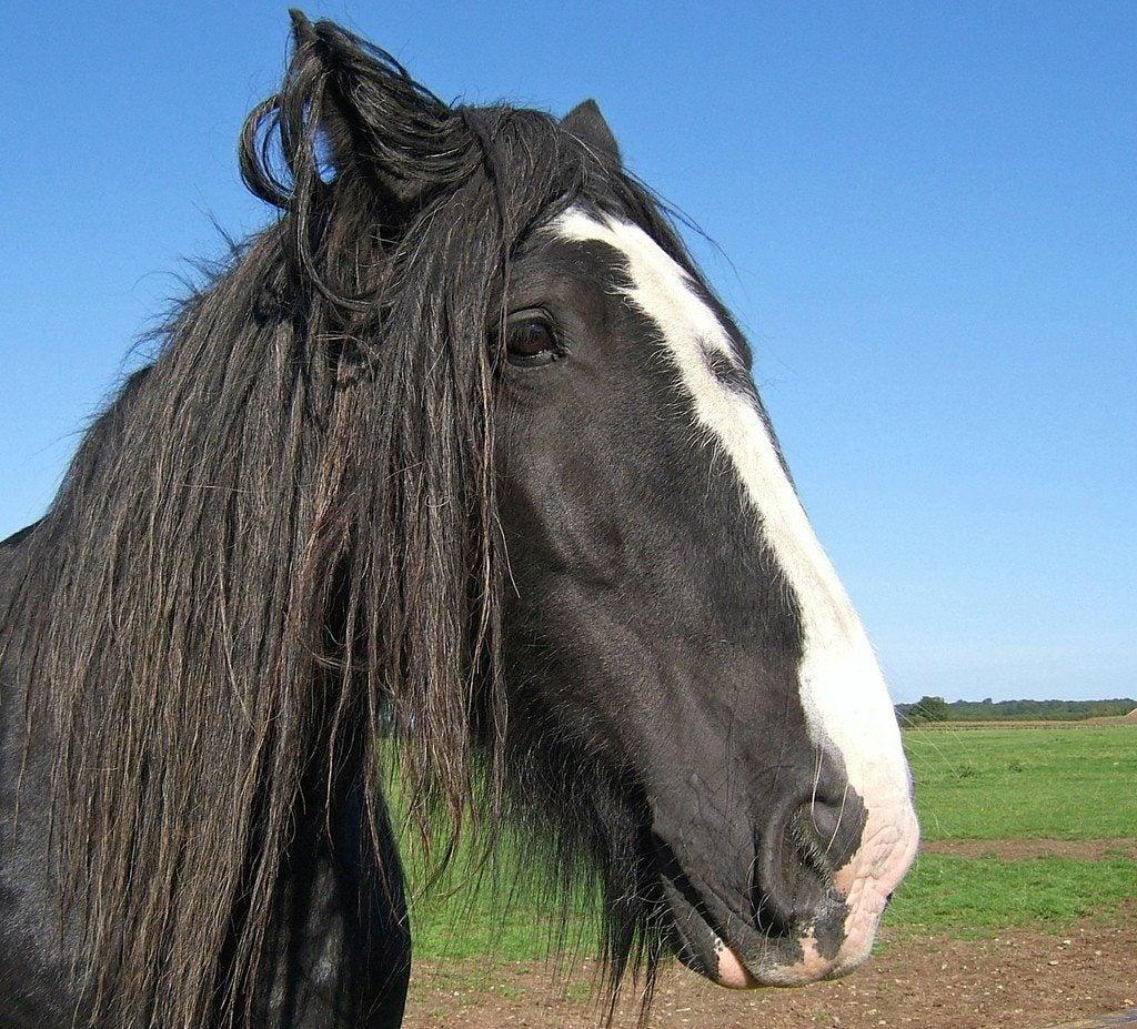 Composting Horse Manure: How Do I Use Horse Manure As ...