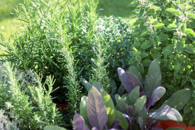 Starting An Herb Garden How To Plant An Herb Garden