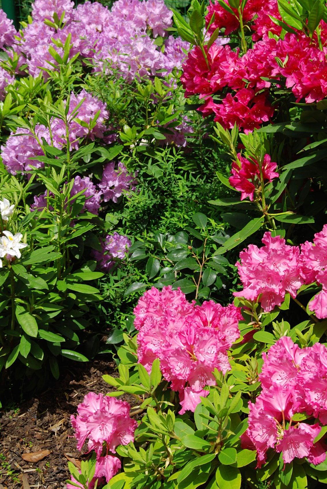Garden plants that like acidic soil pdf for Soil for plants