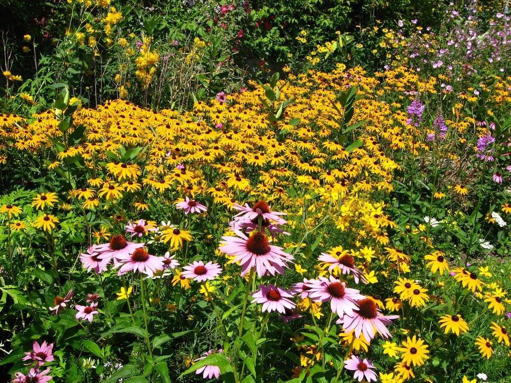 Garden Design Garden Design with Wildflower gardens on Pinterest